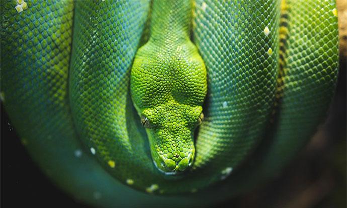 Photo of a beautiful green snake