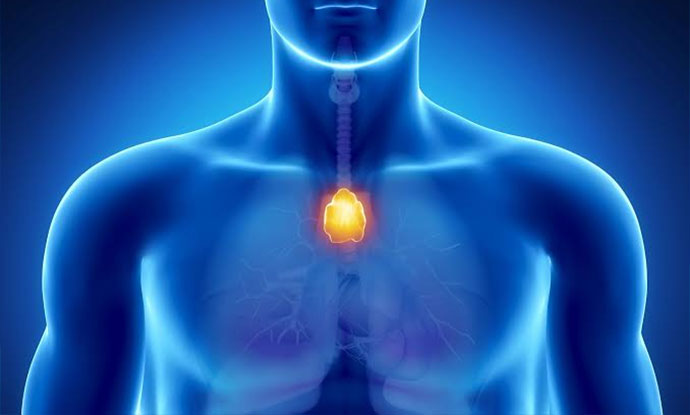 thymus activation